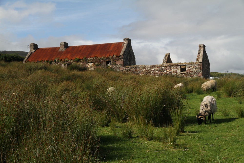 Abandoned cottage, County Mayo